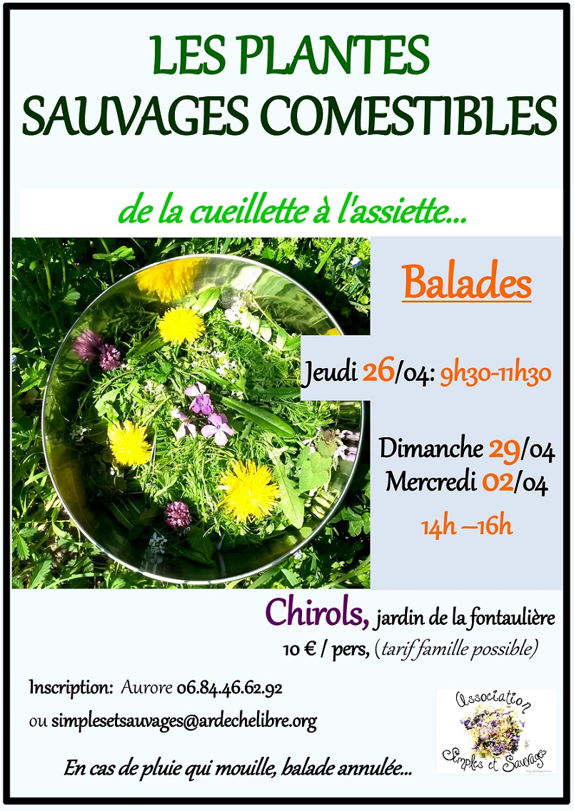 plantes sauvages comestibles 2